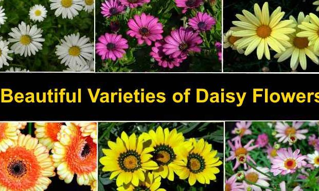 The Meanings of A Few Amazing Flower Types